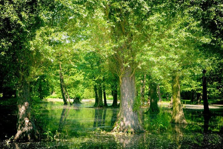 Delta Safaris Swamp