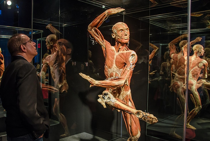 The Body Exhibit Discovery Times Square Museum Science Attraction