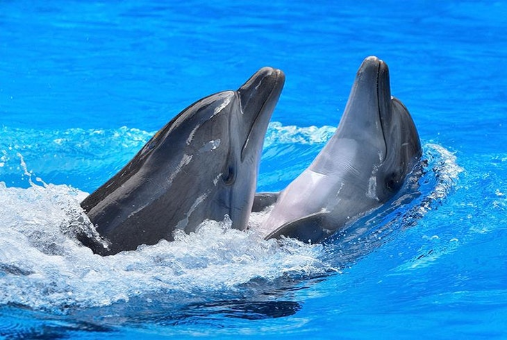 Dolphin Captivity Generic