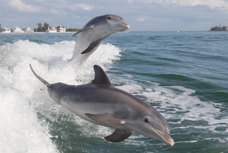 Dolphin Charter