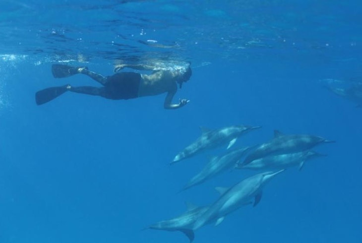 Dolphins And You