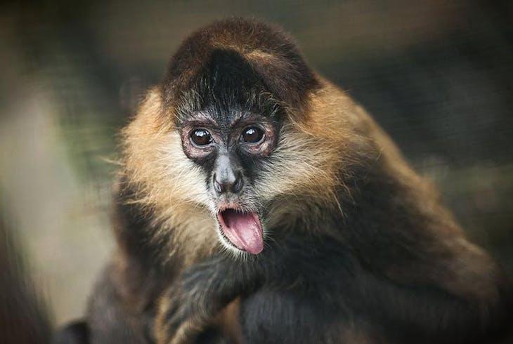 Escape Entertainment Monkey Mayhem