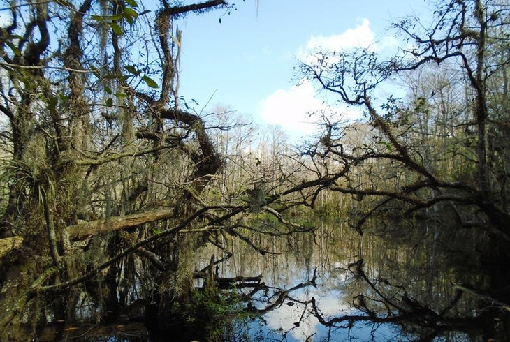Everglades Nature Tours Swamp