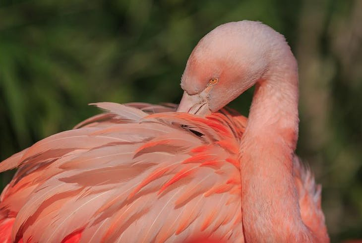 Everglades Safari