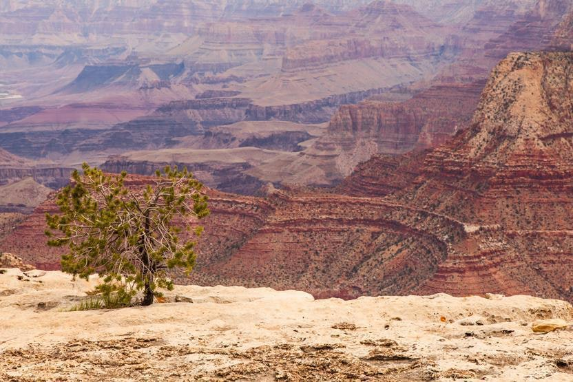 grand canyon connoisseur coupon