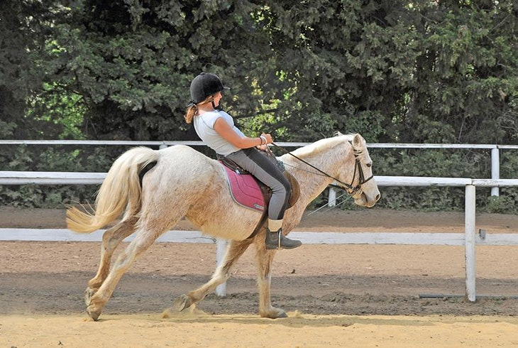 Horsebacking Riding Lesson