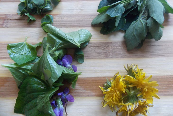 Ledas Urban Homestead Wild Food Foraging