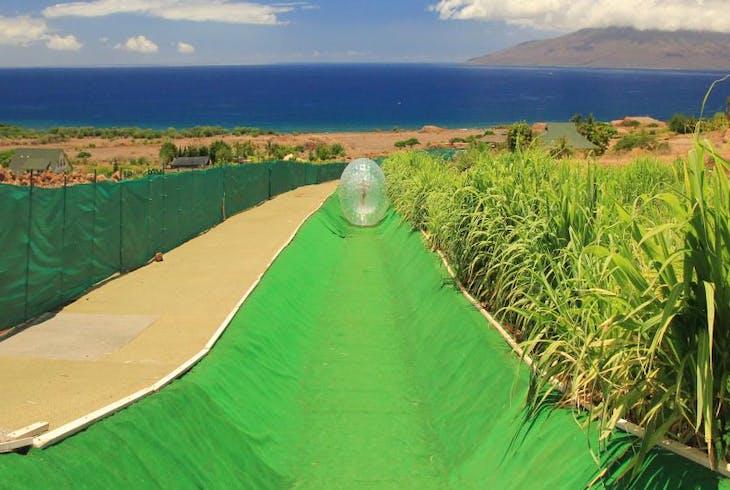 Maui Dragon Fruit Aquaball Adventure Tour