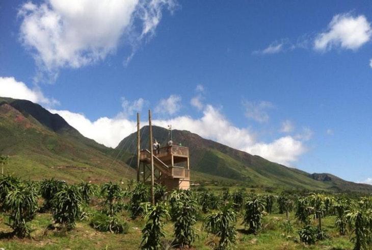 Maui Dragon Fruit Farm Tour