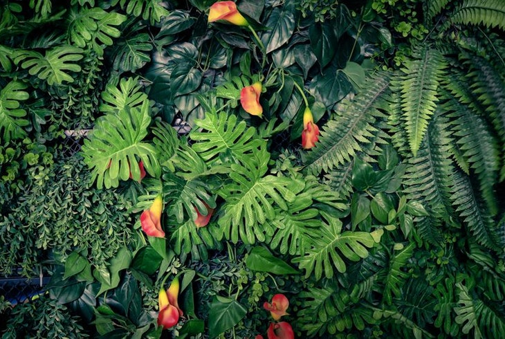 Miami Jungle Island