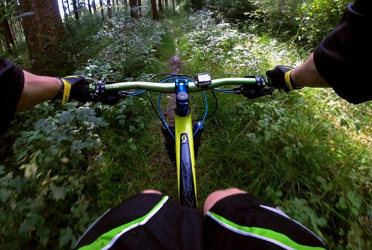 Mountain Bike Forest