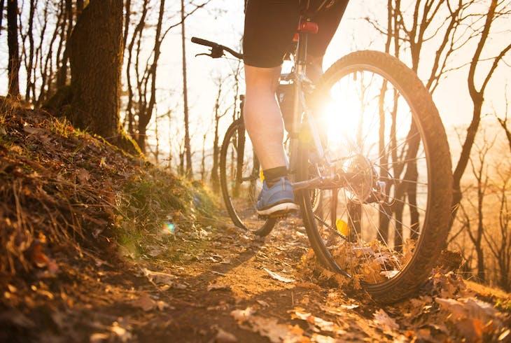 Mountain Bike Forest