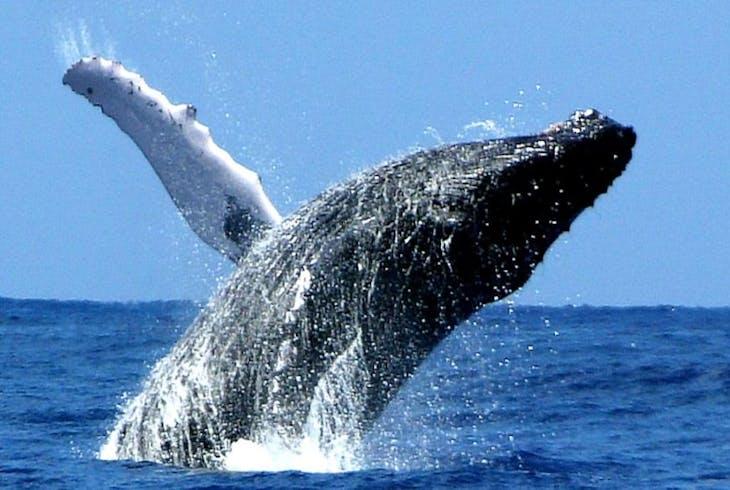 Na Pali Explorer Whale Watching Tour
