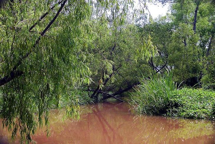 New Orleans Swamp