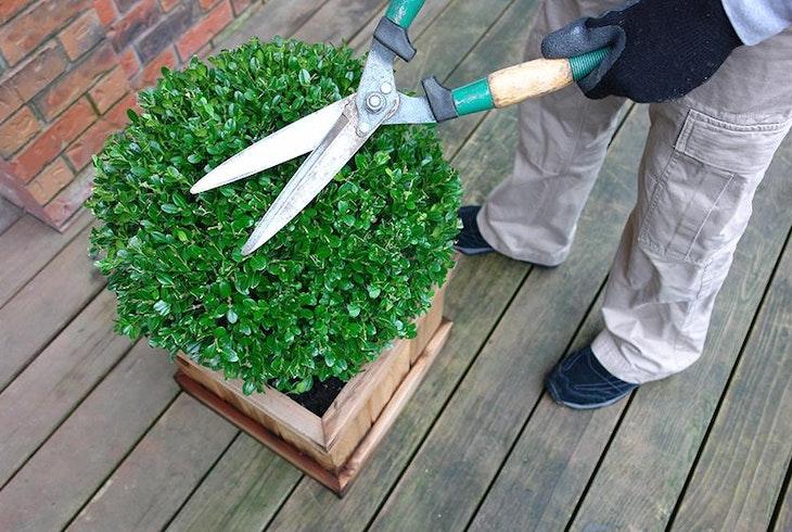 Rooftop Garden Generic