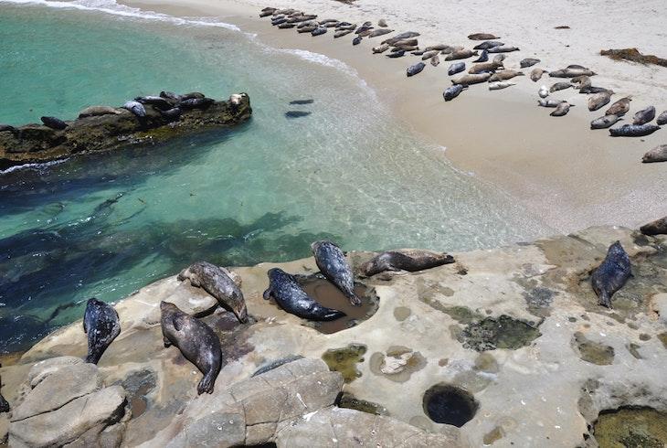 San Diego Seal