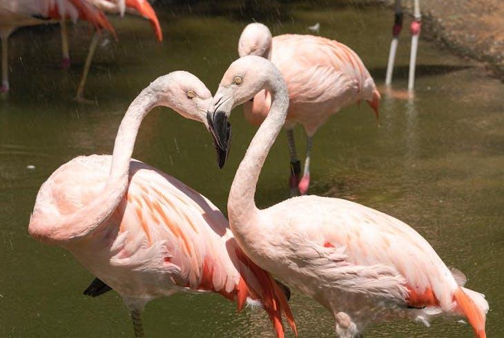 San Diego Zoo Generic