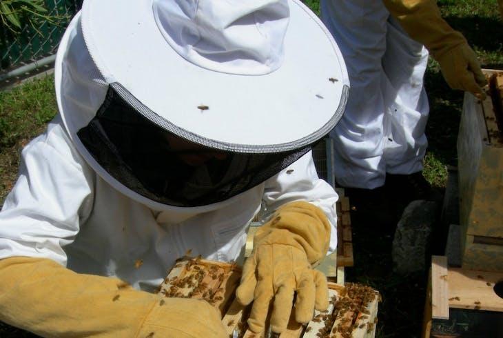 San Francisco Honeyand Pollen Beekeeping