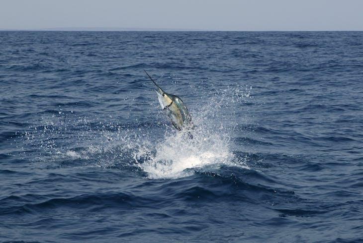 8 Hour Ten Thousand Islands Fishing