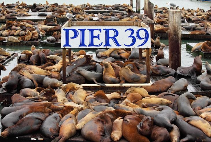 Sf Pier 39