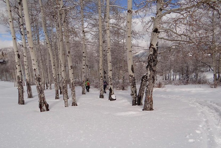 Snowshow Generic