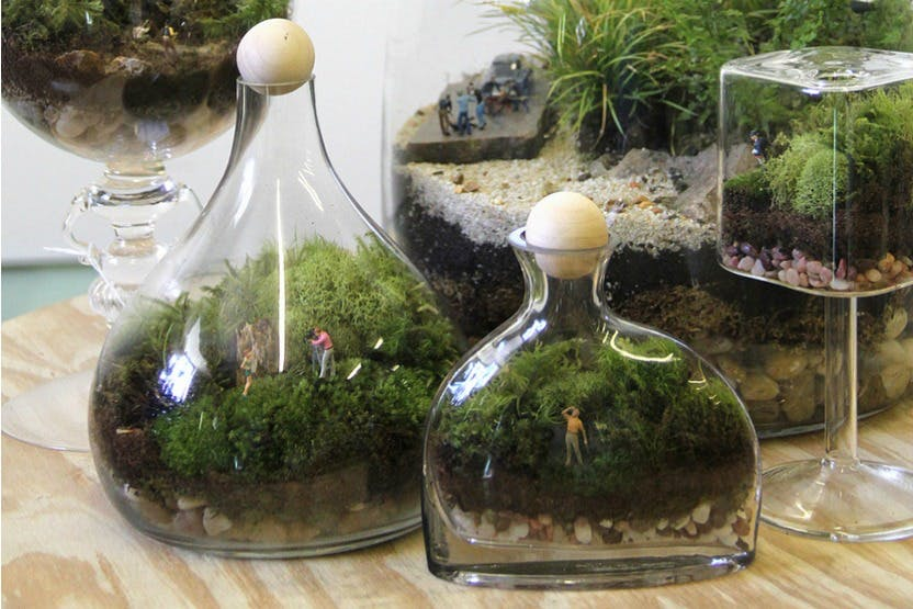 Succulent Terrarium Workshop Twig Terrariums Diy Gardens