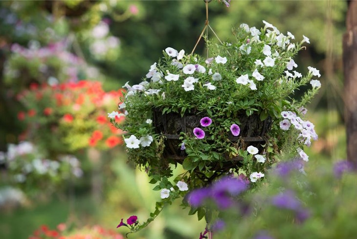 Urban Gardens Generic
