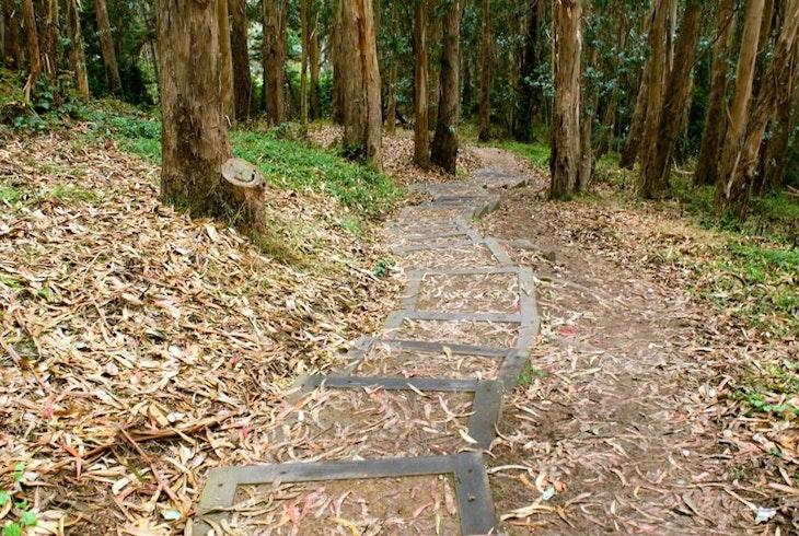 Urban Hiker Sf Presidio