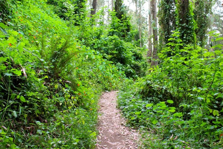 Urban Hiker Sf Urban Jungles