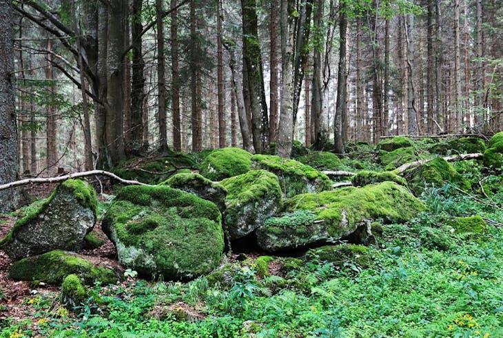 Wilderness Generic