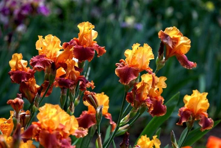 Willamette Valley Gardens Oregon