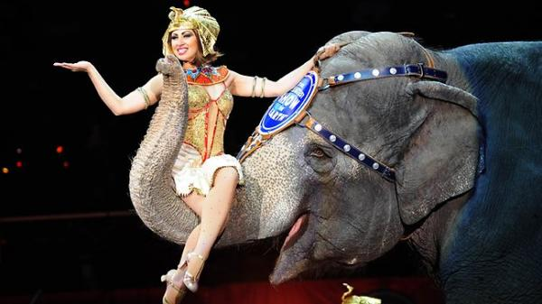 5 Classes to Make you a Circus Star