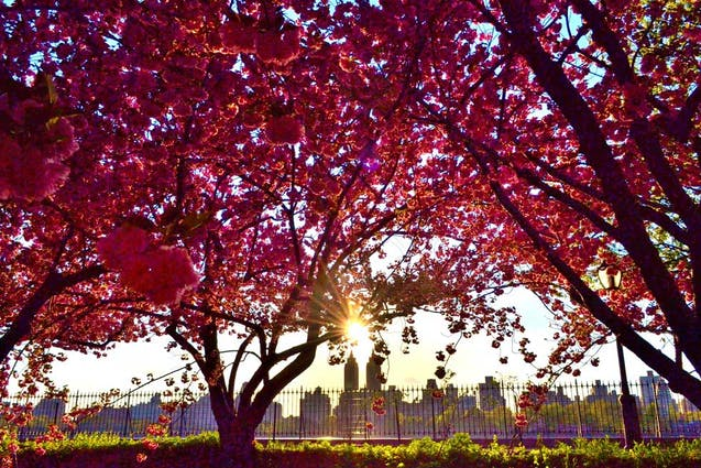 Great Spring Date Ideas in NYC