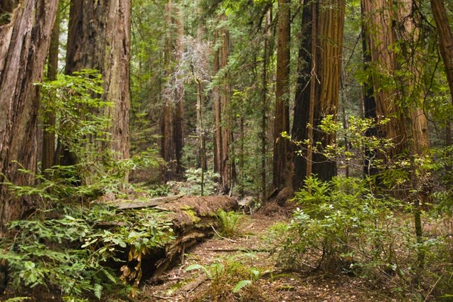 san-fran-date-ideas-nature-hike-wine-tasting-vimbly