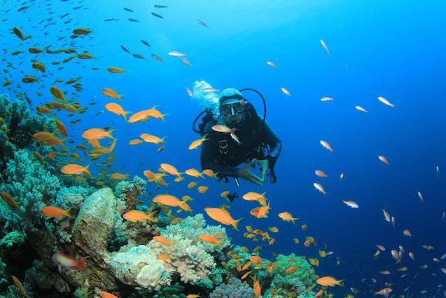 scuba-diving-explore-chicago-vimbly