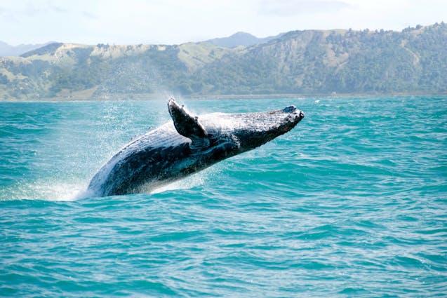 honolulu-date-whale-watch