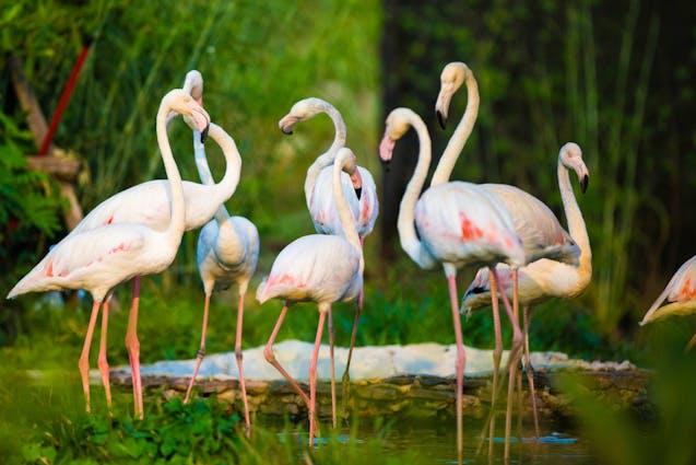 honolulu-island-tour-wildlife