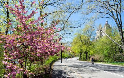 0_new Central Park Bike Tour