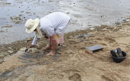 0_new Clam Digging