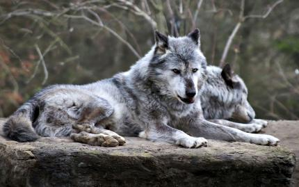 Hike and Wolf Sanctuary