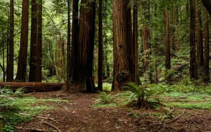 0_new Muir Woods