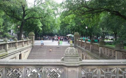 Photo Safari in Central Park