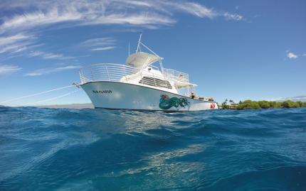Kohala Divers Two Site Dive Snorkel