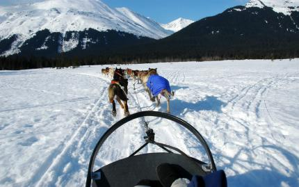 Alaska Dog Sled Generic
