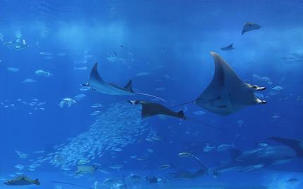 Aquarium Generic
